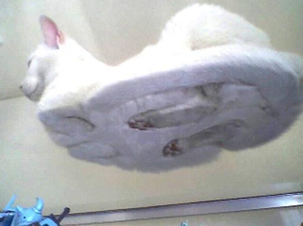 cat (8)