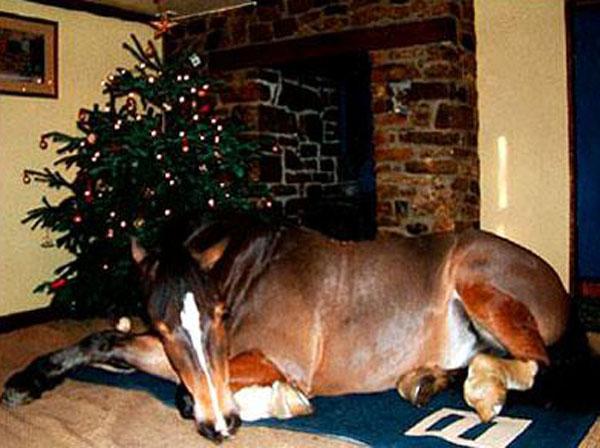 конь дома